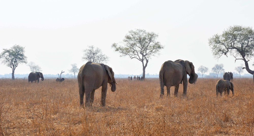 walk_elephants_7.jpg