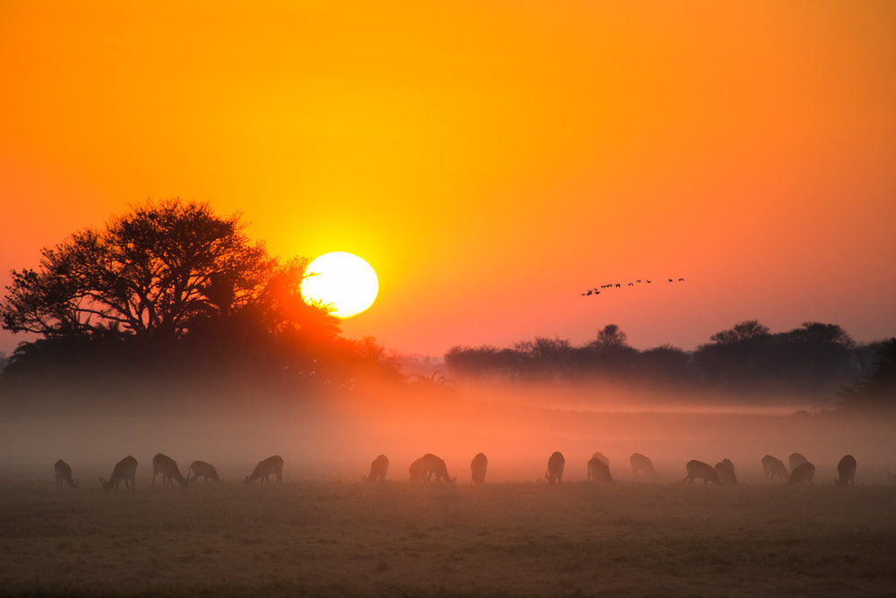 Busanga sunrise from Mukambi Plains Camp.jpg