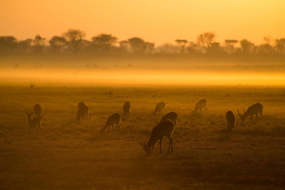 Busanga sunrise.jpg