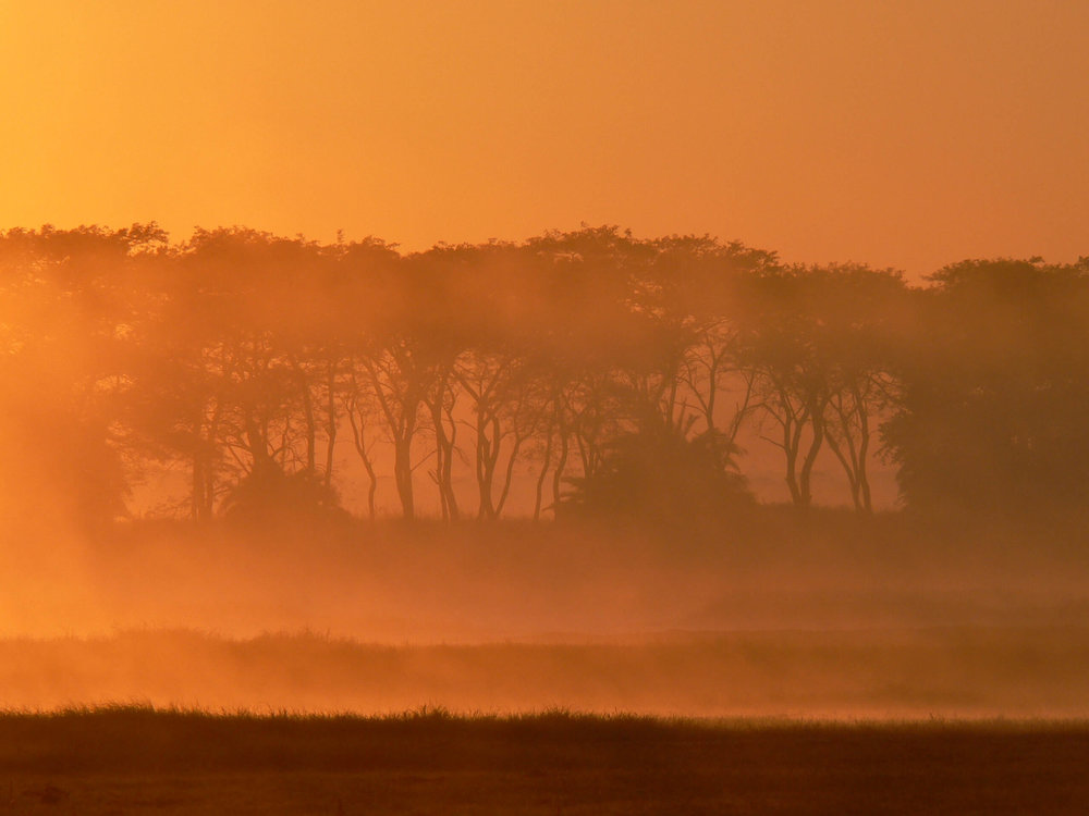 Sunrise on the Busanga plains.JPG