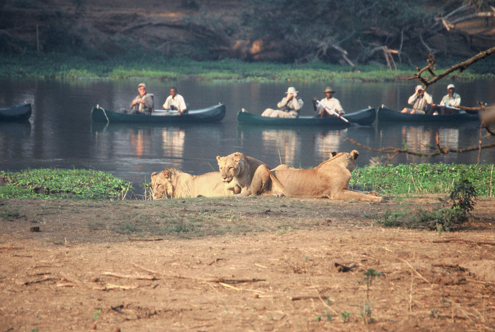 STC Canoeing with Lion.jpg