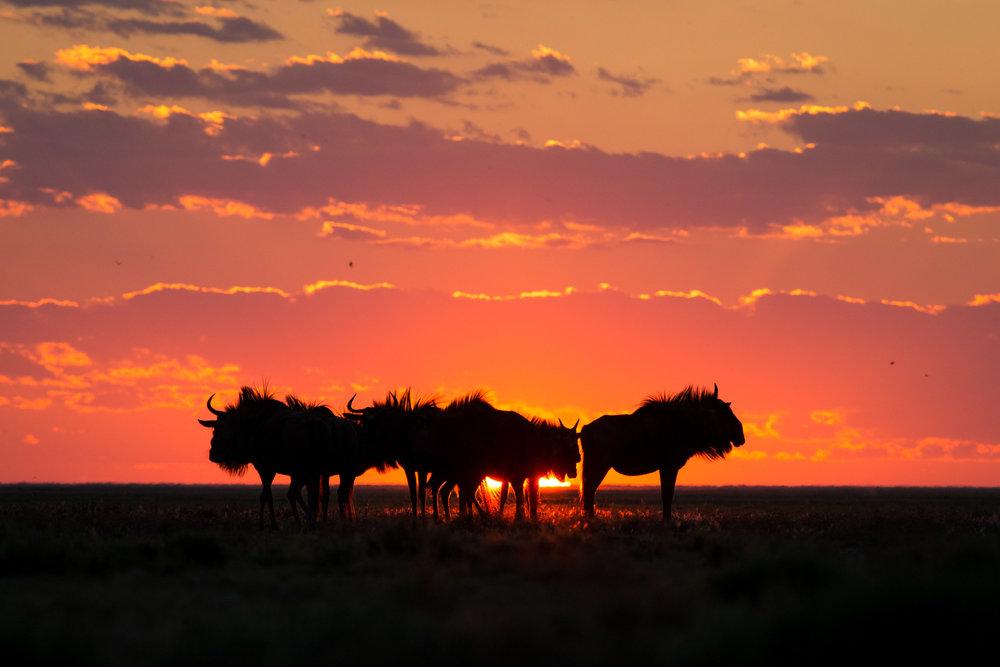 Copyright Will Burrard-Lucas_Norman Carr Safaris
