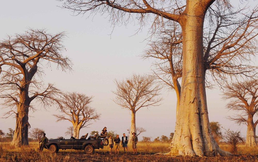 drive_baobab_forest_3.jpg