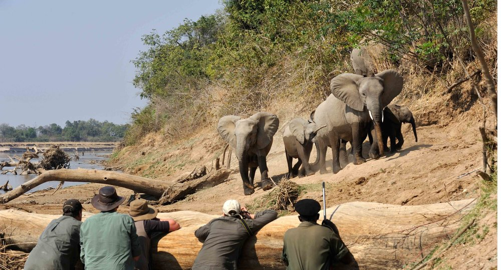 elephant_hide_4.jpg