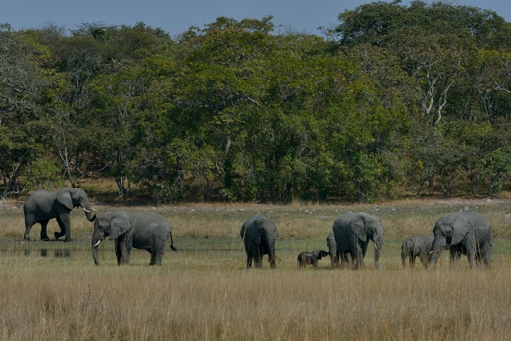 Elephant_Family herd (1).JPG