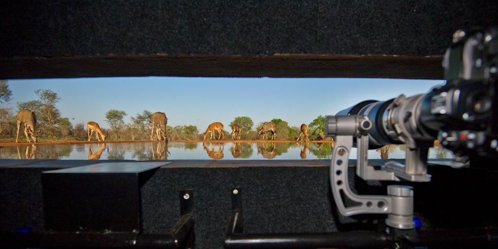 Africa Unlocked Photographing antelope.jpg