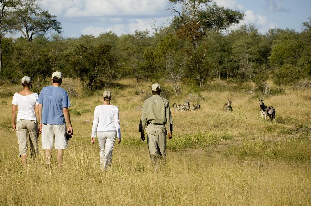 ngala_safari_lodge_-_walking_safari2.jpg