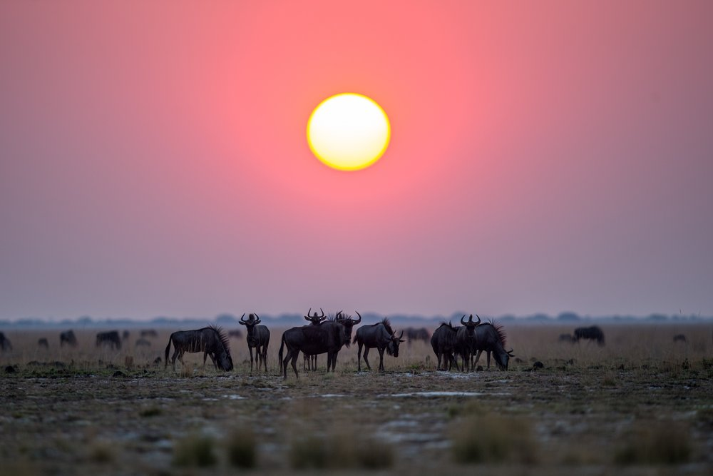 Photo credit : African Parks