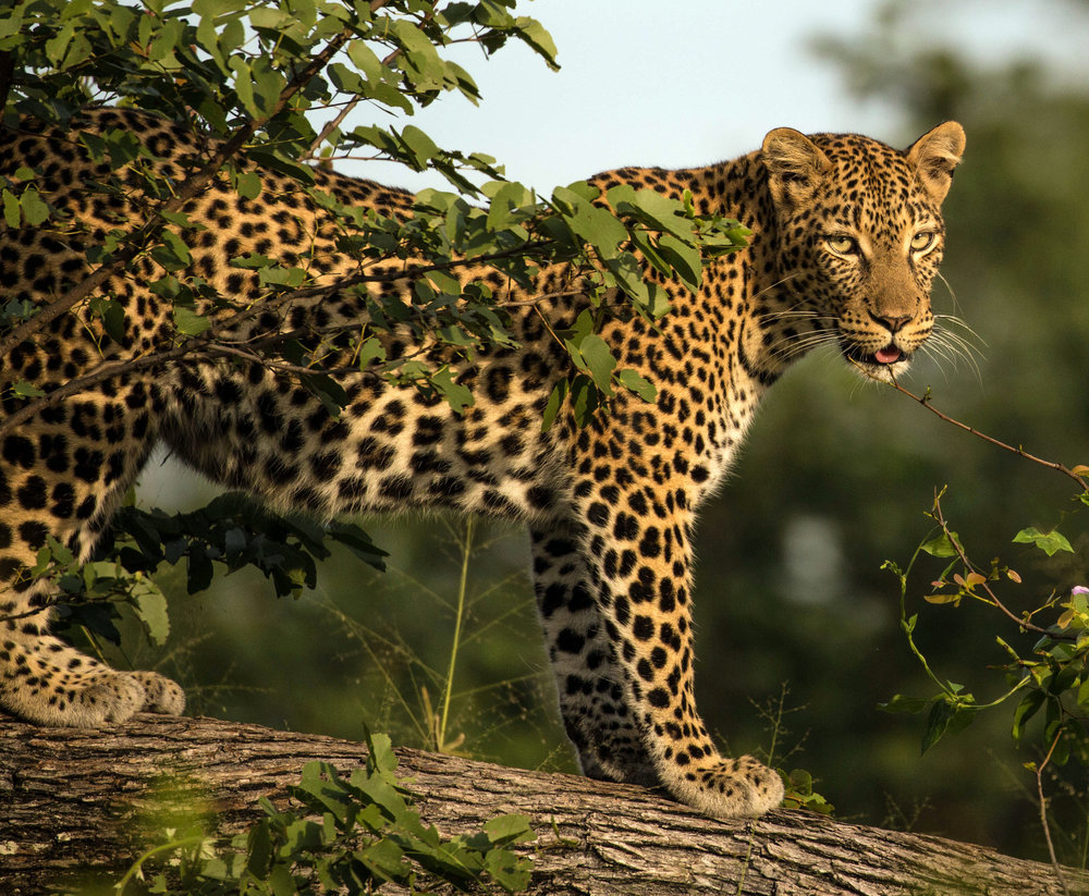 John Raddatz, Botswana Photography Tour