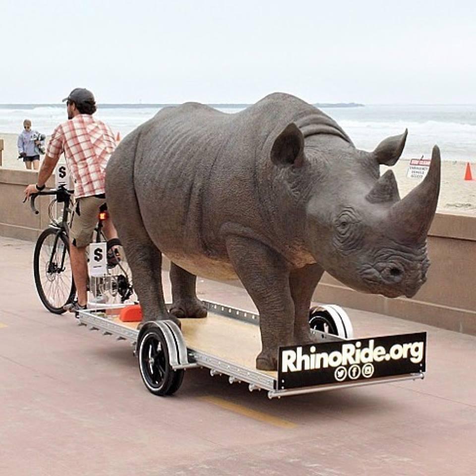 rhino ride 2.jpg