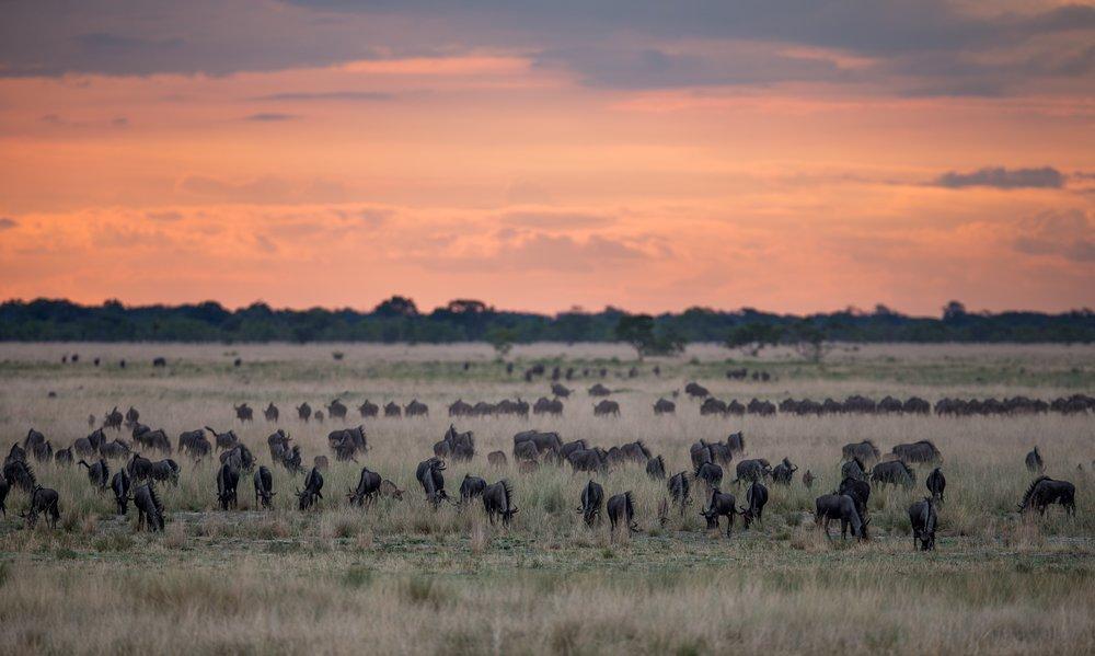 REF Africa parks- photo by Will Burrard-Lucas, Liuwa Plains.jpg