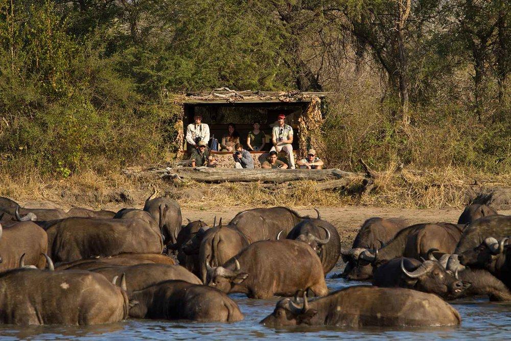 5-Africa-on-Foot-walking-safaris2.jpg