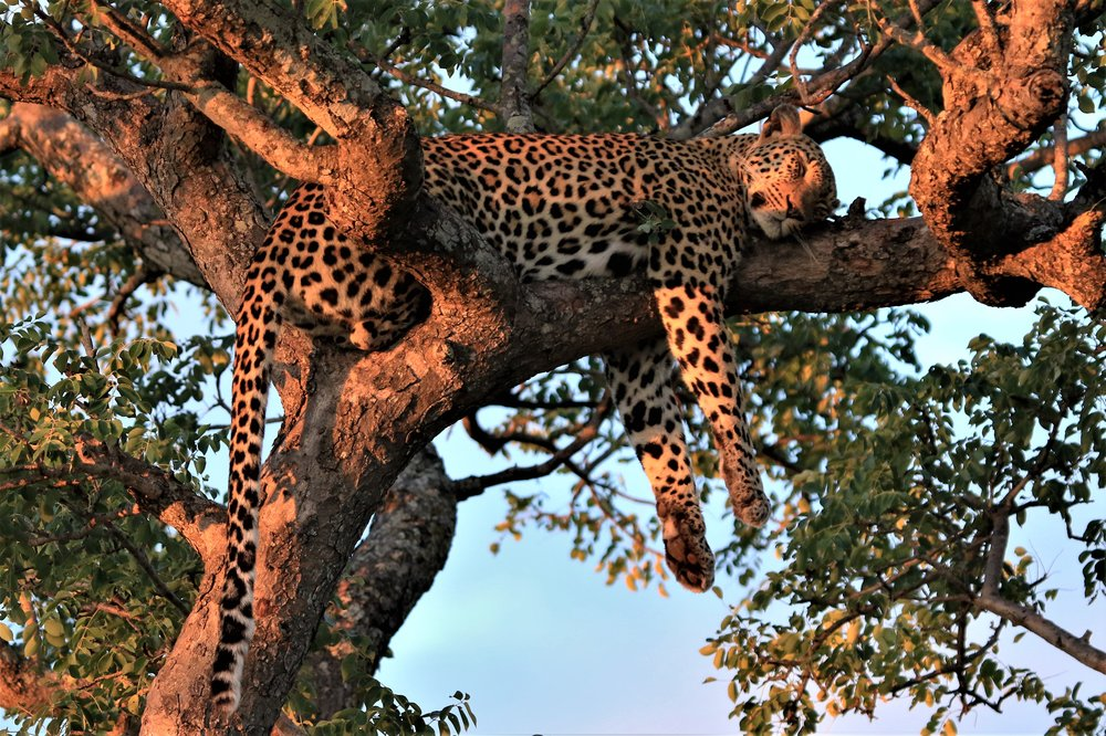 Scott Moses- Lower Zambezi, Zambia