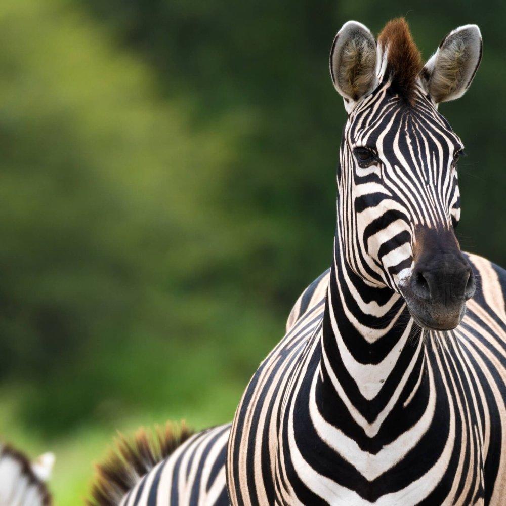 Scheduled safaris -