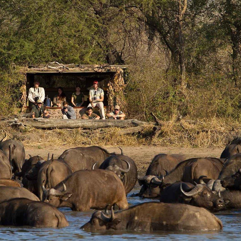 Photographic safaris -