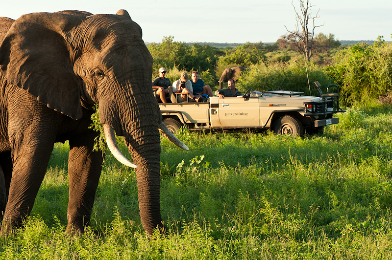 ET Elephant bull and vehicle-.jpg