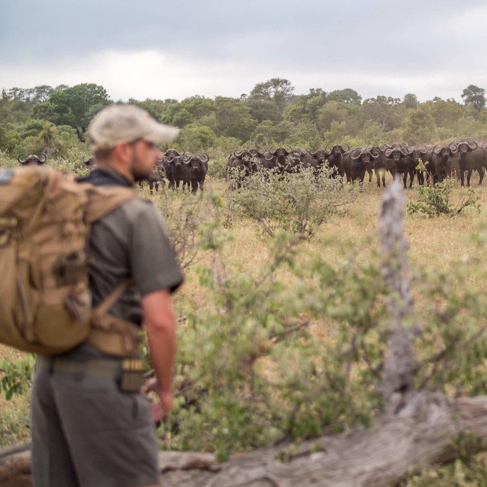 Walking safari -