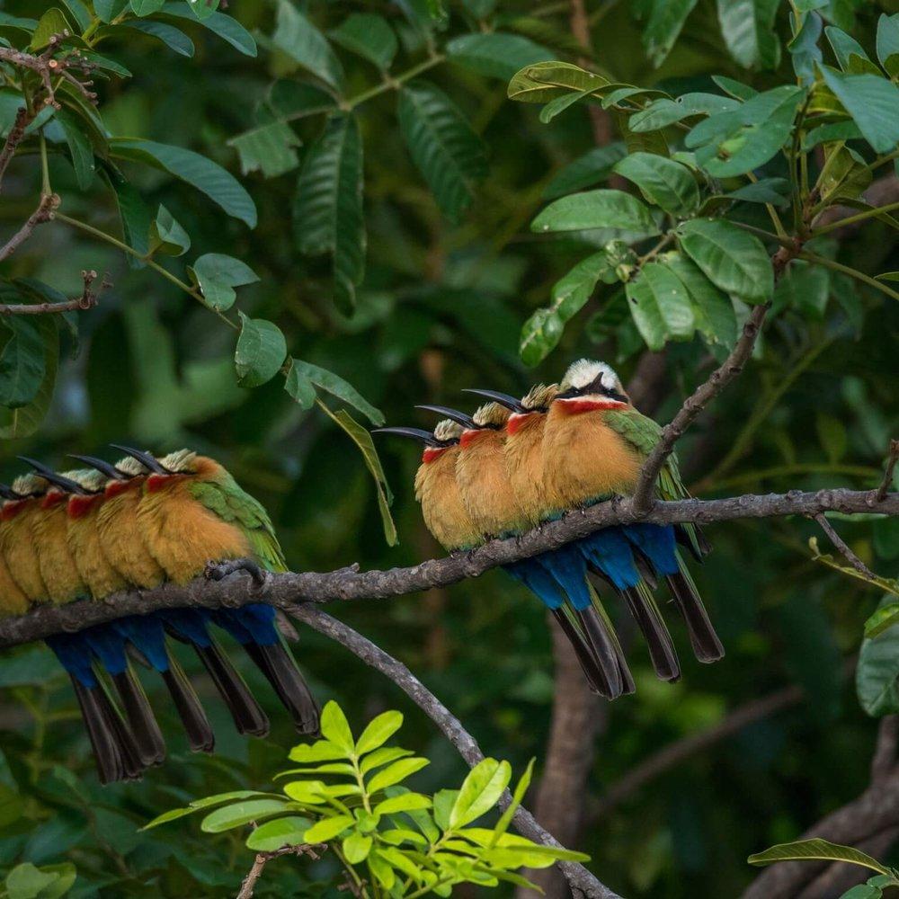 Specie specific safari -