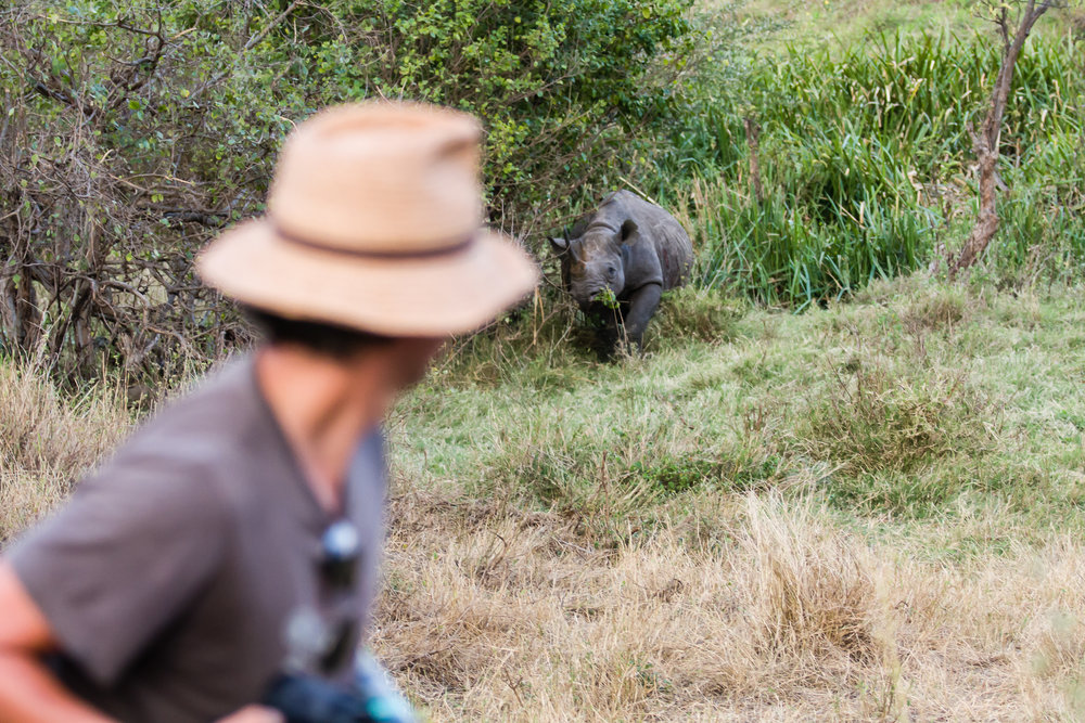 elephantsmating_markuseichelberg_kenya2014 (17).jpg