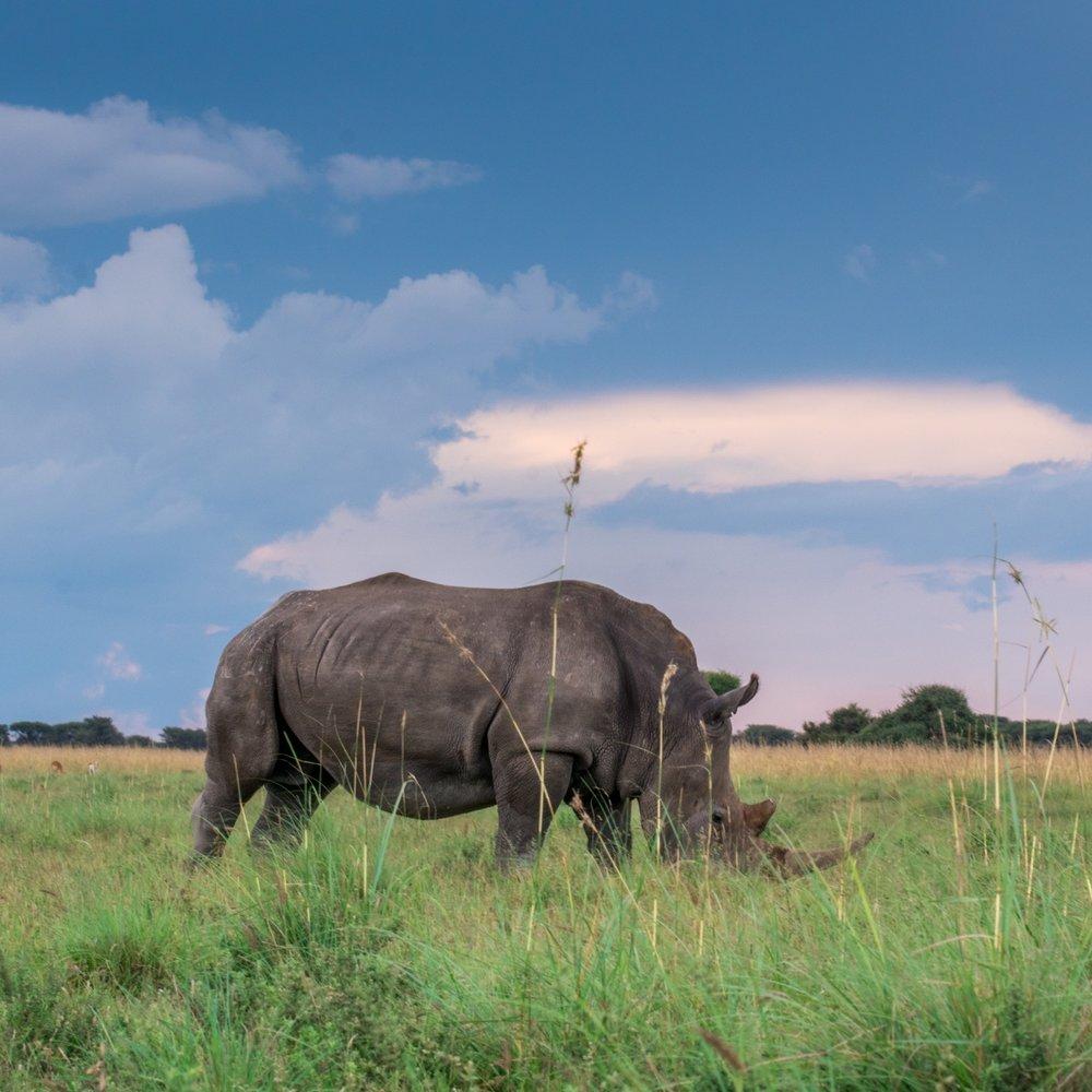 Alle safaris -