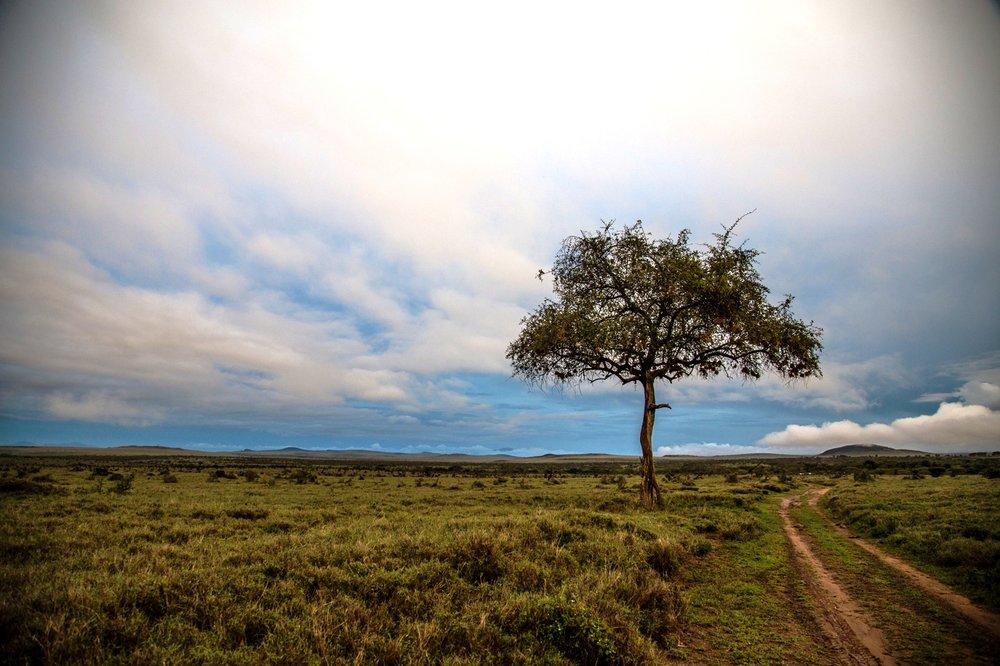 Kenya Borana Nov 2014 Max Melesi (22).jpg
