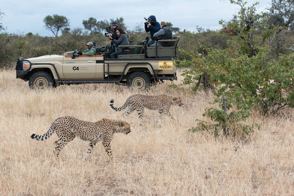 Game drive cheetah sighting.jpg