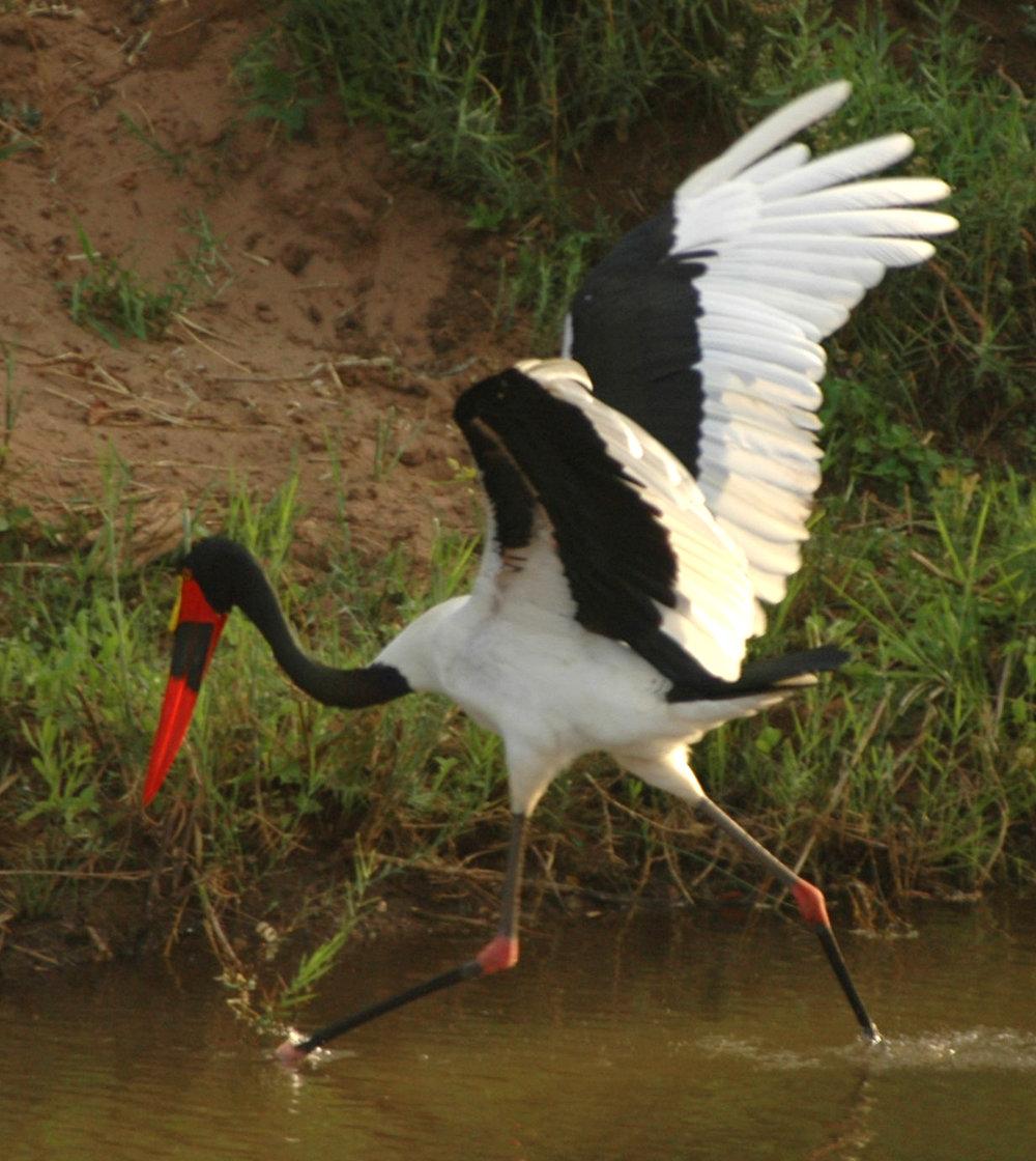 EcoTraining Birding (24).jpg