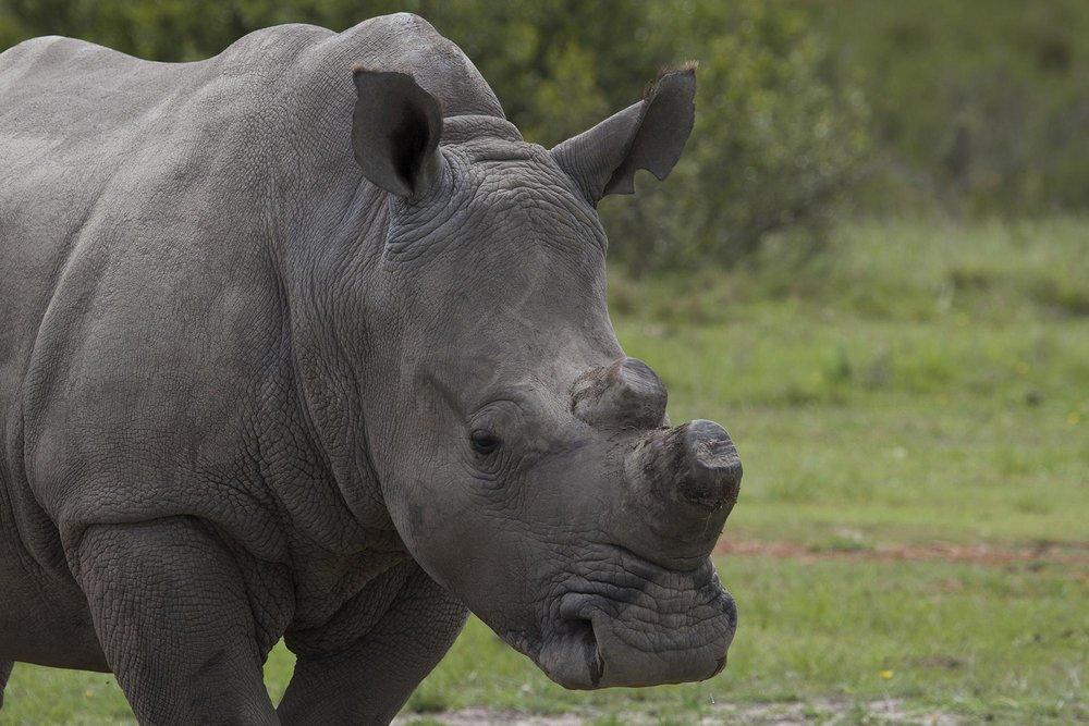 rhino-1-full.jpg