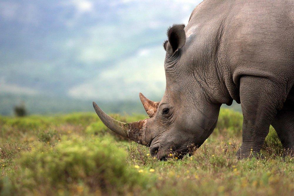 rhino-2-full.jpg