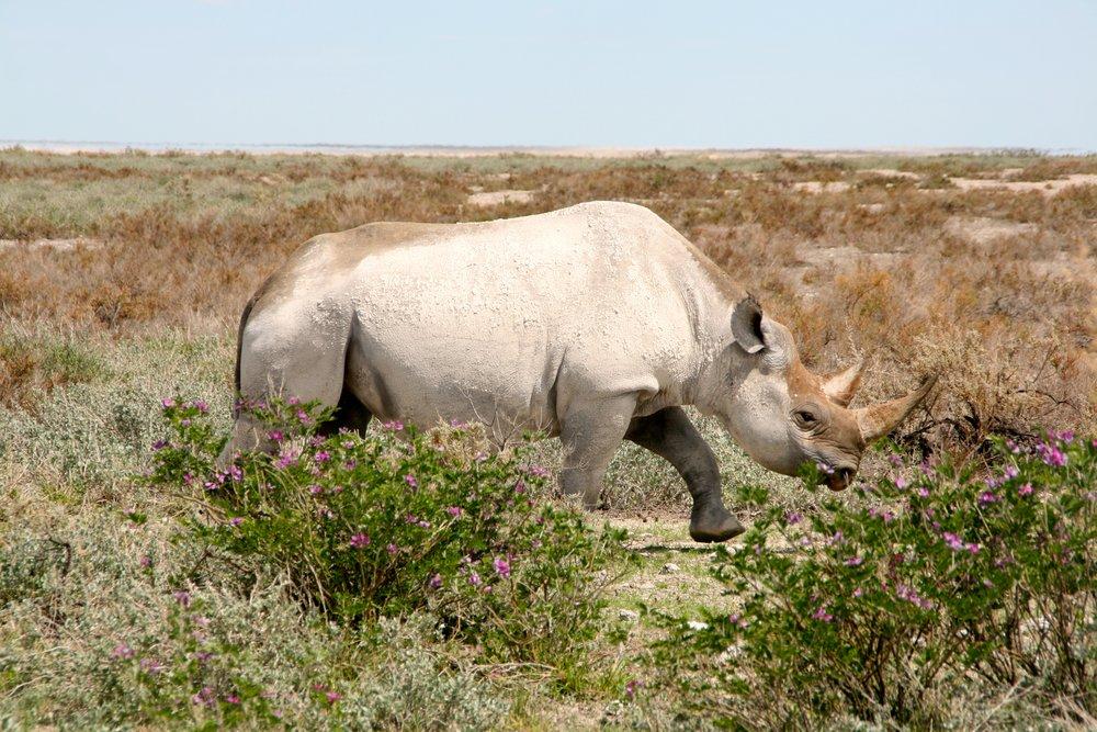 Namibia 314.JPG