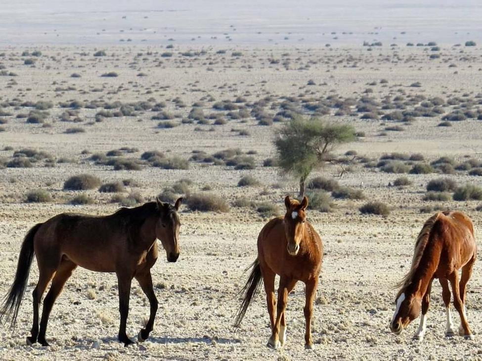 aus-namib-horses-1-1024x731.jpg