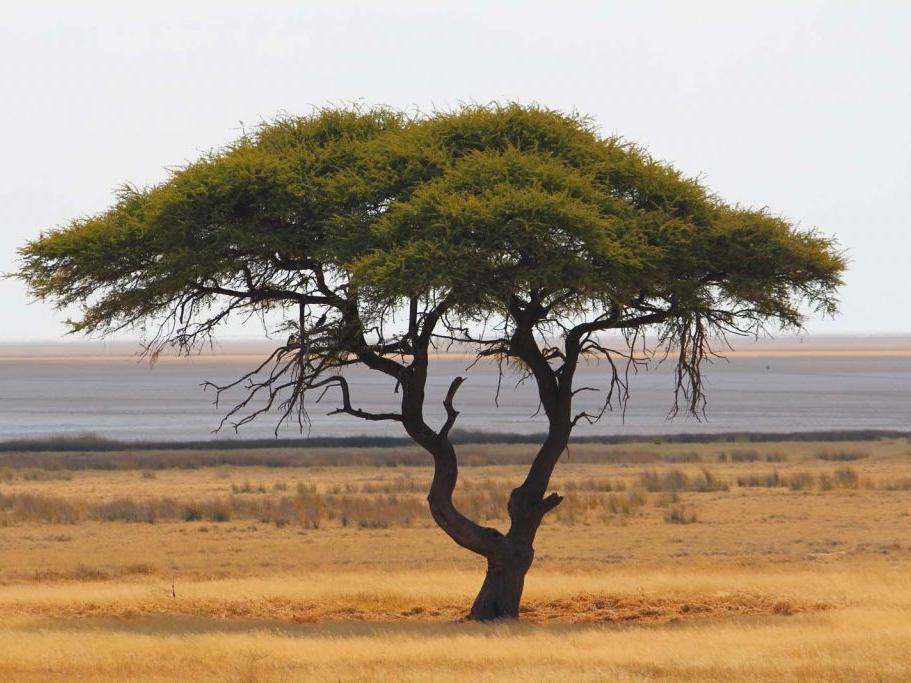 tree-etosha-pan-1-1024x683.jpg