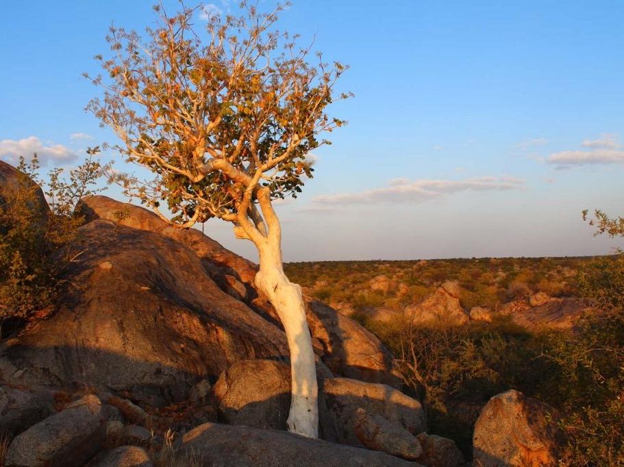 tree-grootberg-area-1-1024x683.jpg