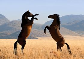 csm_Wild-Horses01_ff83163813.jpg