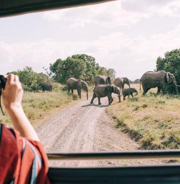 elephants hello emilie.JPG
