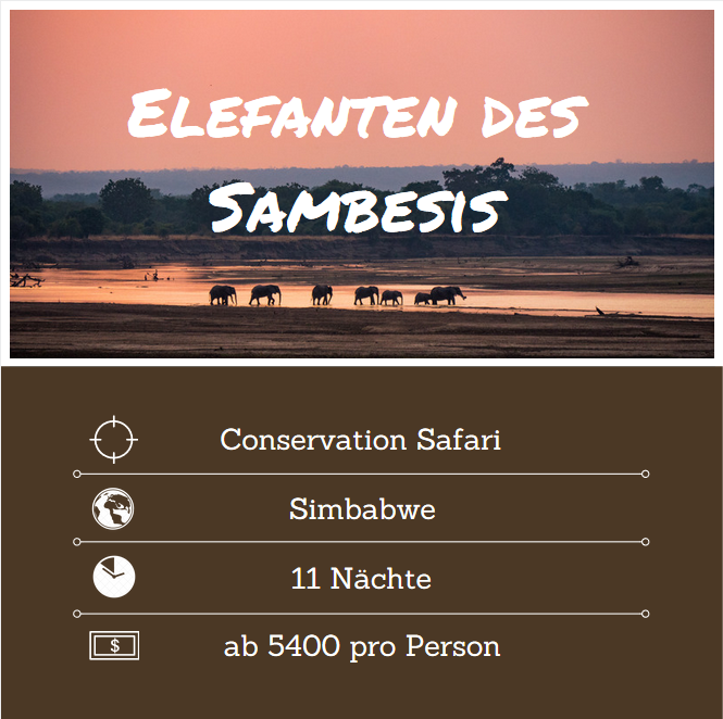 Elefanten des Sambesis.PNG