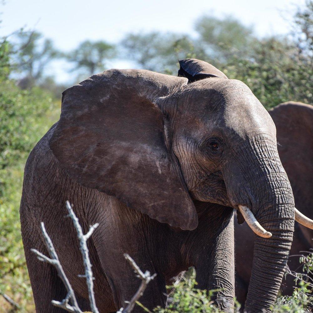 Conservation-Safaris -
