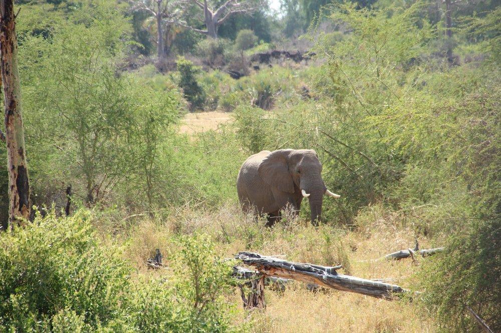elephant_makuleke.JPG
