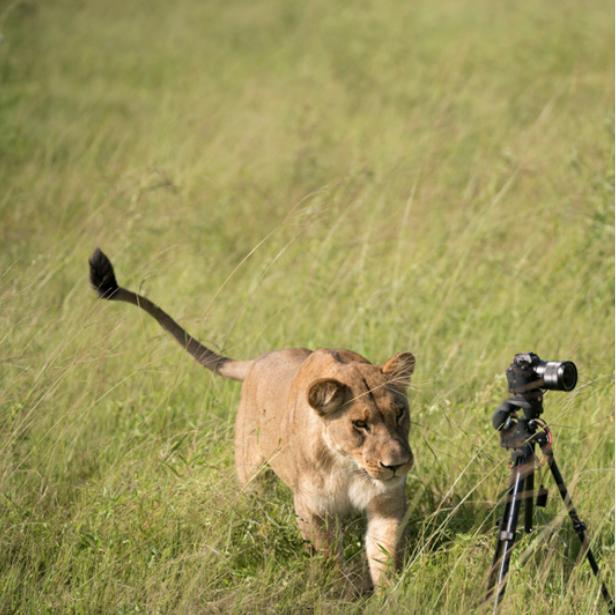 Photography safaris -