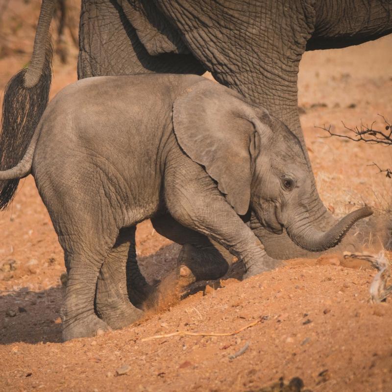 Conservation safaris -