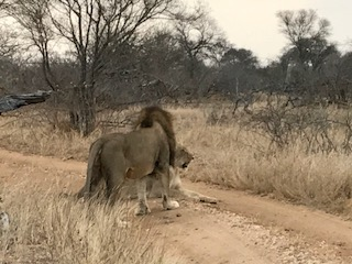Andrew Lee, Corporate Safari in South Africa