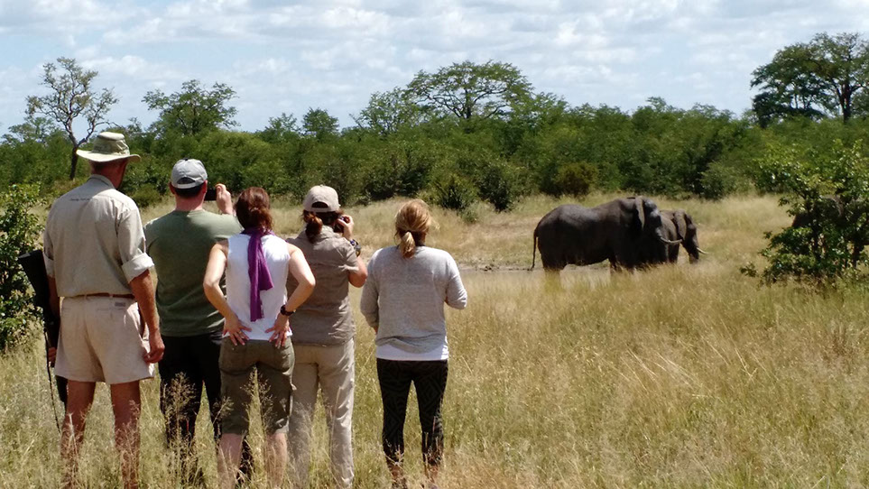 14 - up close to elephants on a game walk.jpg