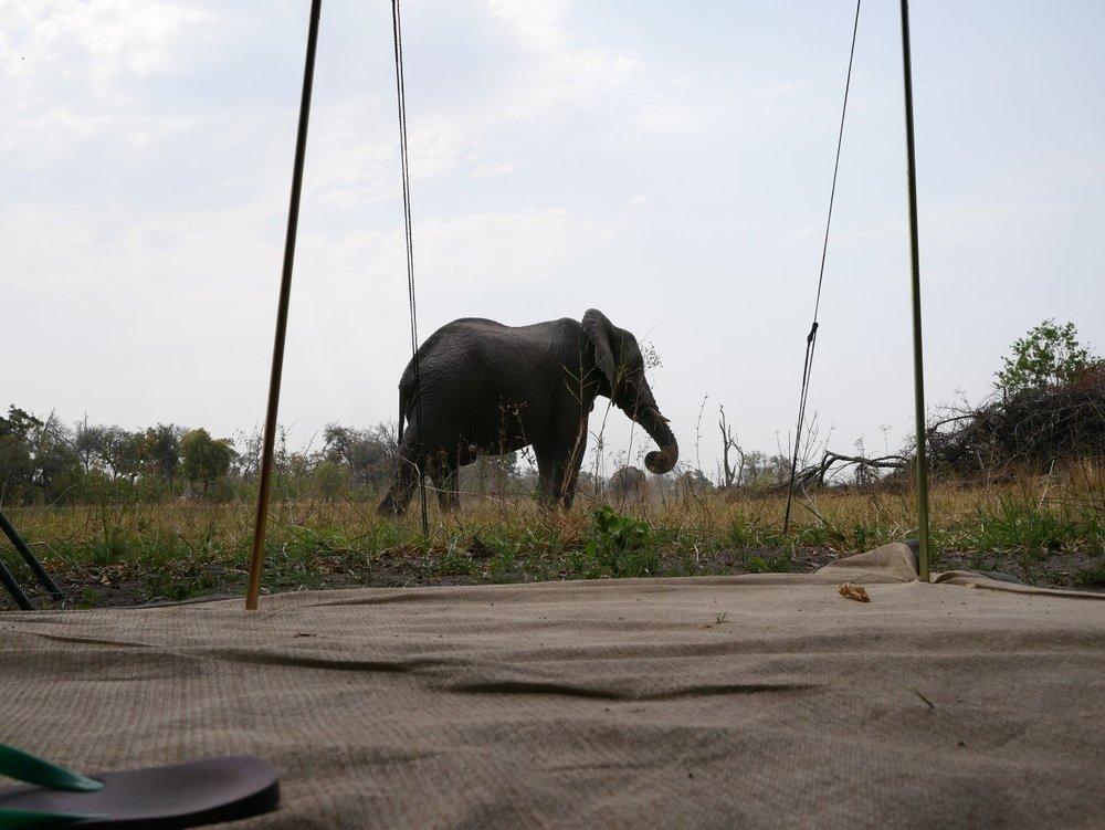 Elefanten, die direkt vor der Haustür herumspazieren? Sieht man Zuhause auch nicht alle Tage