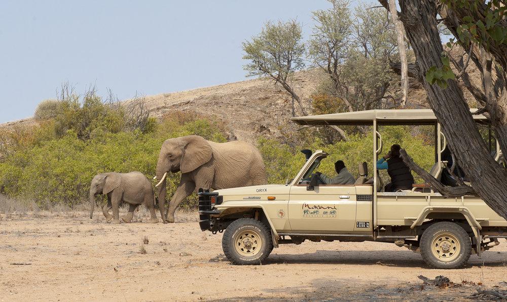 Desert Adapted Elephant in Huab River.jpg