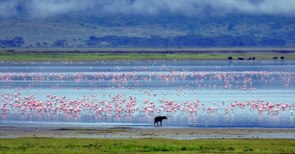Ngorongoro.PNG