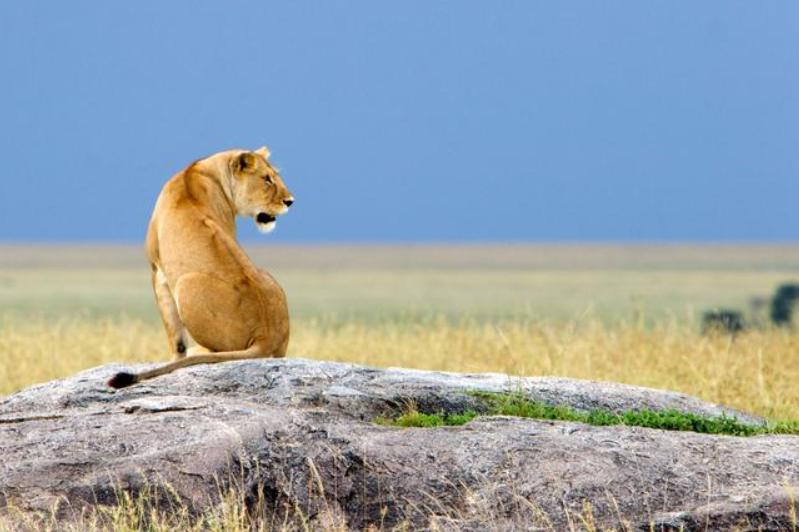 Eastern Serengeti.PNG