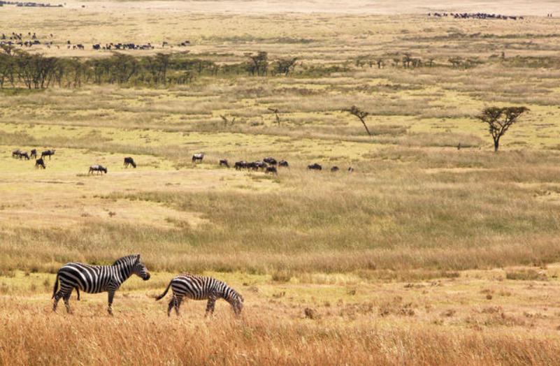 Eastern Serengeti 3.PNG