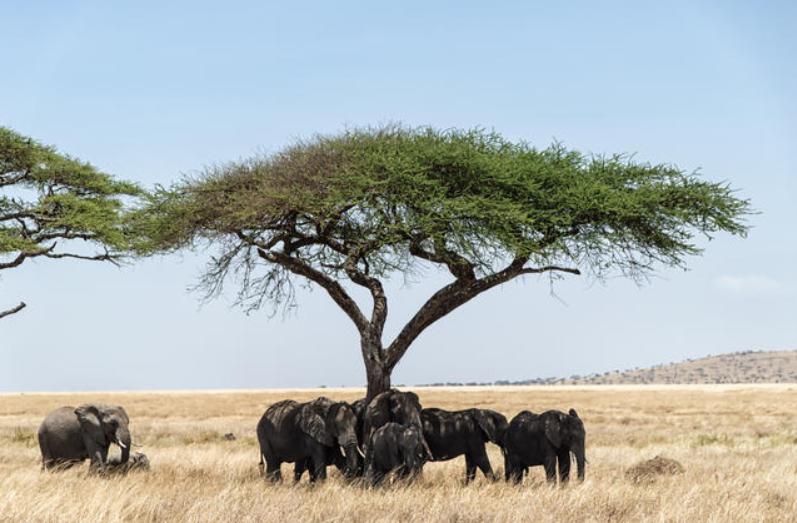 Eastern Serengeti 2.PNG