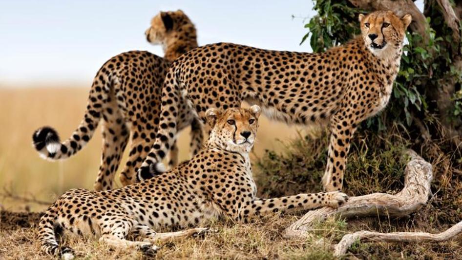 Northern Serengeti 3.PNG