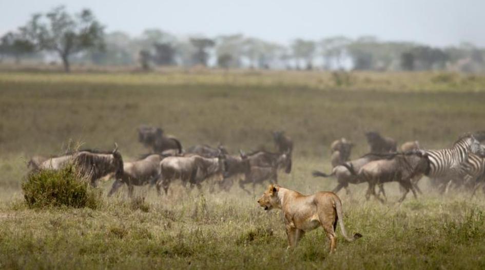 Northern Serengeti.PNG